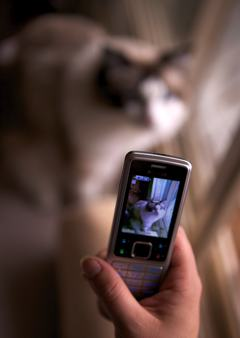 A photo of a camera phone taking a picture of a cat