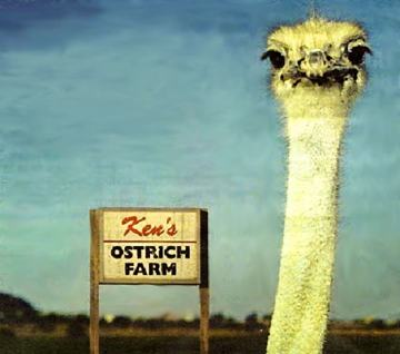 Photo of an ostrich head with a sign in the background that says Ken's ostrich farm.